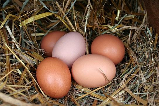 Domača jajčka