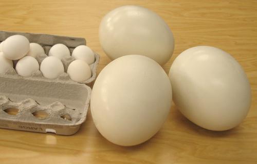 gosja jajca